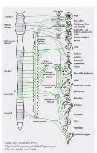 Anatomie_CMD